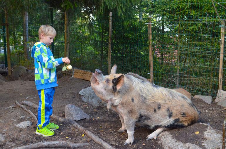 8-vuotias Miska opetti Täplää istumaan käskystä.