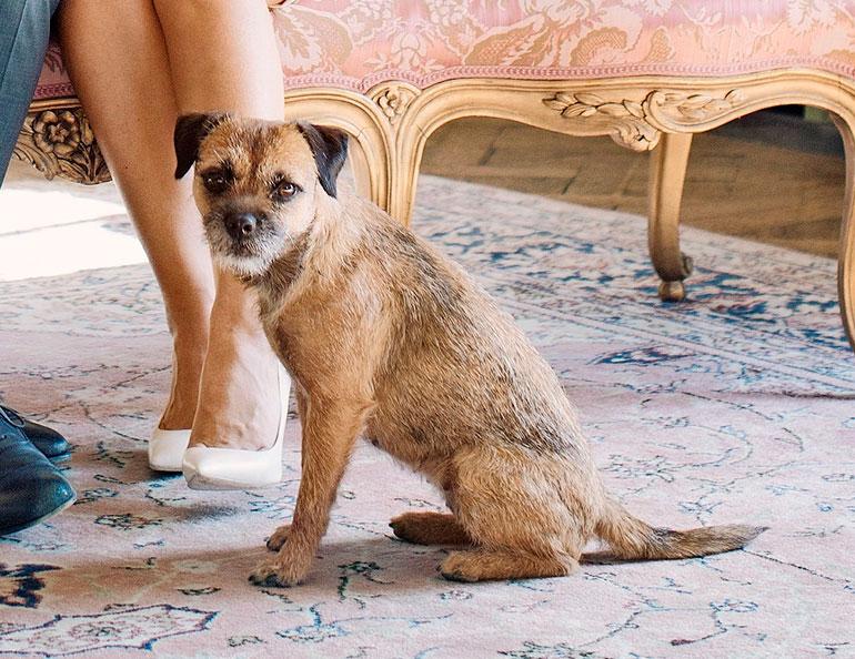 Prinssi Carl Philipin koira Siri