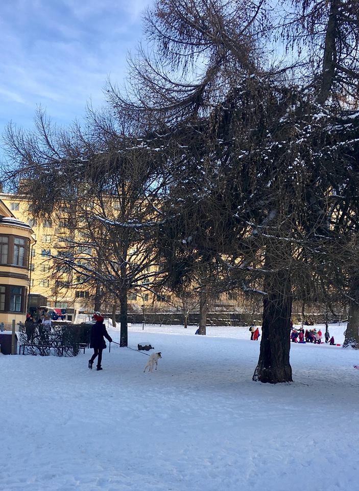 Paula Koivuniemi ulkoilutti koiraansa Sinebrychoffin puistossa Helsingissä.