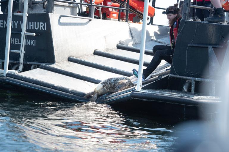 Pienempi kuuteista arkaili veteen menoa. Eläintenhoitaja Laura Karonen kannustaa sitä lähtemään.