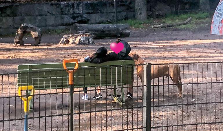 Kun muut koiranulkoiluttajat poistuivat koira-aitauksesta, niin lihaskimppu otti Sadun hellästi kainaloonsa. Kaunotar painoi päänsä luottavaisesti miestä vasten.