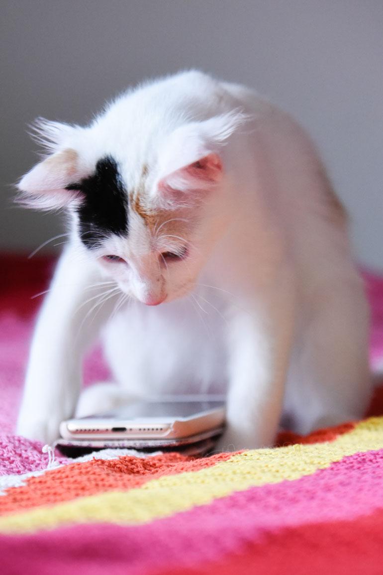 Spiruliina pelaa kännykällä kissoille tarkoitettua peliä.