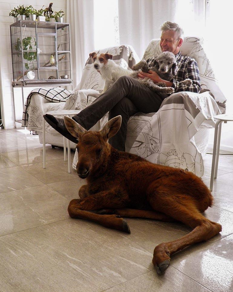 Pikkuinen Urho lempipaikallaan olohuoneen lattialla. Markun sylisssä koirat Buster ja Elli.