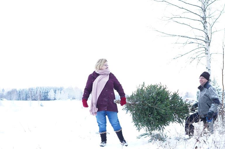 Markku ja Anne Saukko hakevat joulukuusen tutun maatilallisen metsästä. – Oma pituus kertoo sopivan kuusen korkeuden, Markku vinkkaa. Kuva on syksyllä ilmestyneestä, suositusta Koko kansan Markku – tuunaa kotona ja puutarhassa -kirjasta.