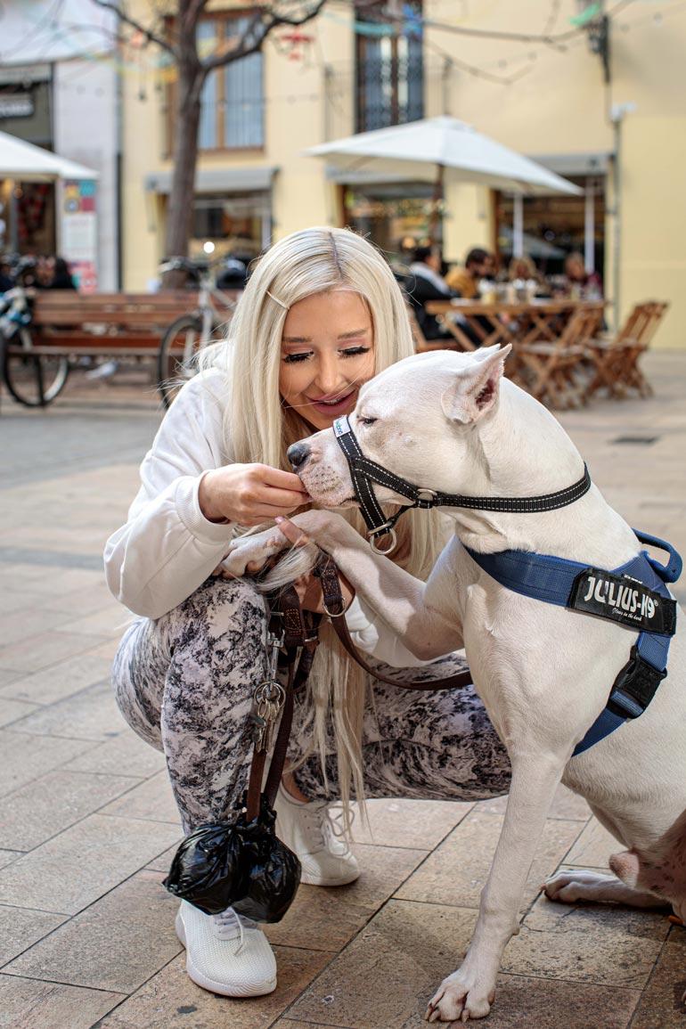 Pian yhdeksän kuukautta täyttävä Aspen on vielä 35-kiloinen, mutta sille on tulossa vielä kymmenisen kiloa lisää lihasta. – Se on tosi vaativa koira, Amanda kertoo.