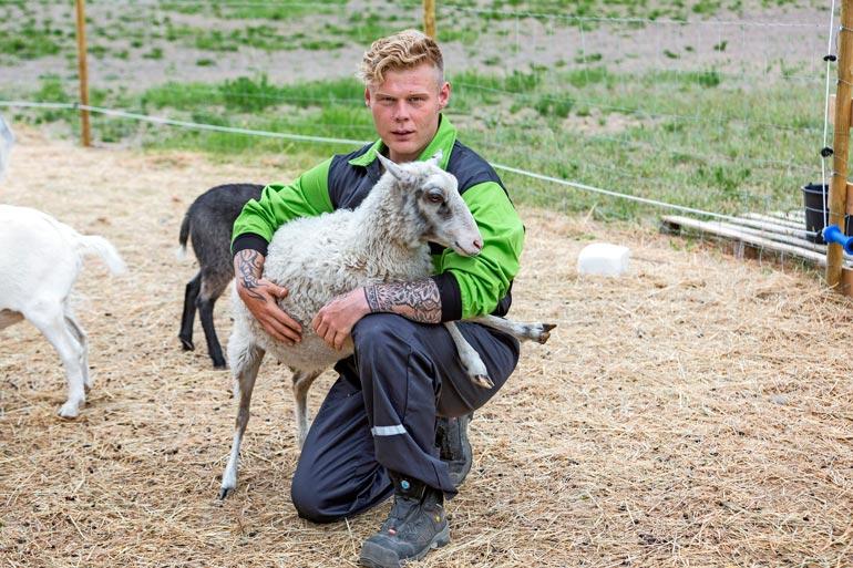 Heidi-lampaalla on erityinen paikka Akin sydämessä. – Se oli maatilani ensimmäinen lammas.