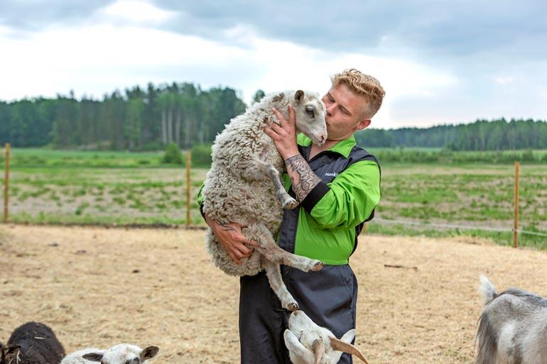 Mira kiiruhtaa Akin luokse aina tämän saavuttua lammasaitaukseen.