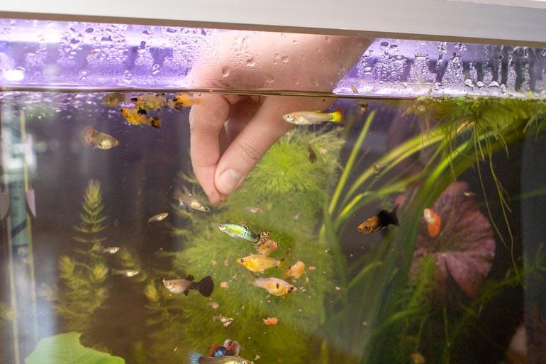 Akvaarioiden hoitoon kuluu paljon aikaa. – Marlon-koirani kyttää aina vieressä ja on mustis heti, kun kalat saavat huomiota, Elina nauraa.