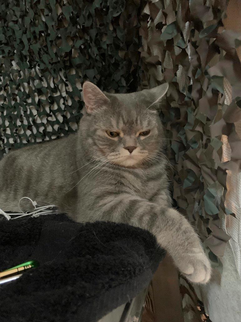 Jone Nikulan kissa.