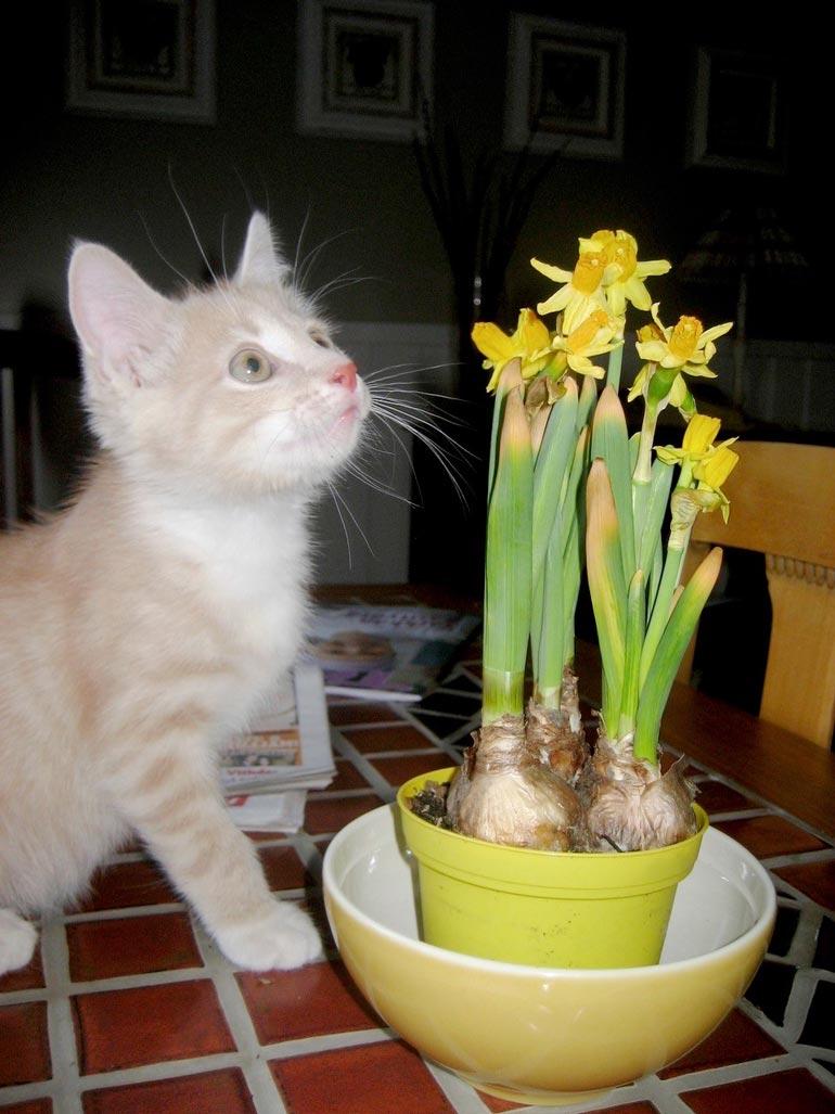 Oliver tuli pienenä pentuna Paulan elämään yhdeksän vuotta sitten.