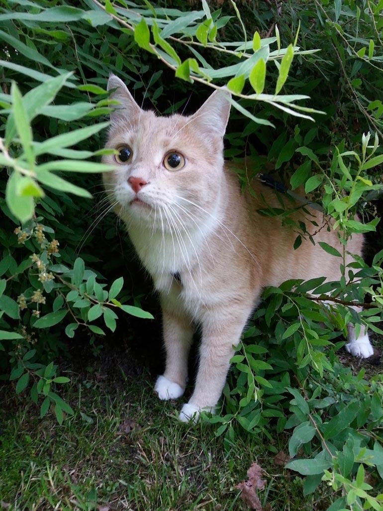 Nuuh, mitäs täältä löytyy? Oliver saa ulkoilla ja kiipeillä valjaissa niin paljon kuin remmiä riittää!