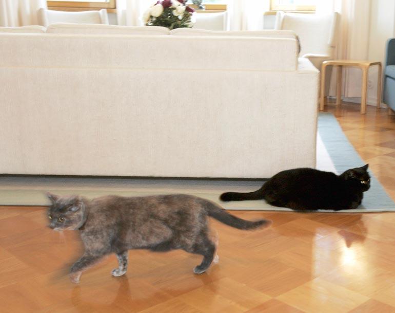 Tarjalla oli kissoja myös presidenttivuosinaan. Vuonna 2004 musta Miska otti rauhallisesti, kun lehdistöä saapui taloon, mutta Rontti vaikutti kiireisemmältä.