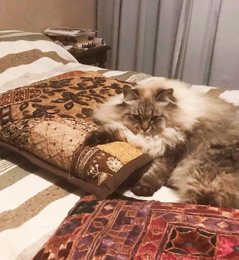 Meggi nauttii kissanpäivistä presidentin sängyllä. Kuva on presidentti Tarja Halosen itsensä ottama.