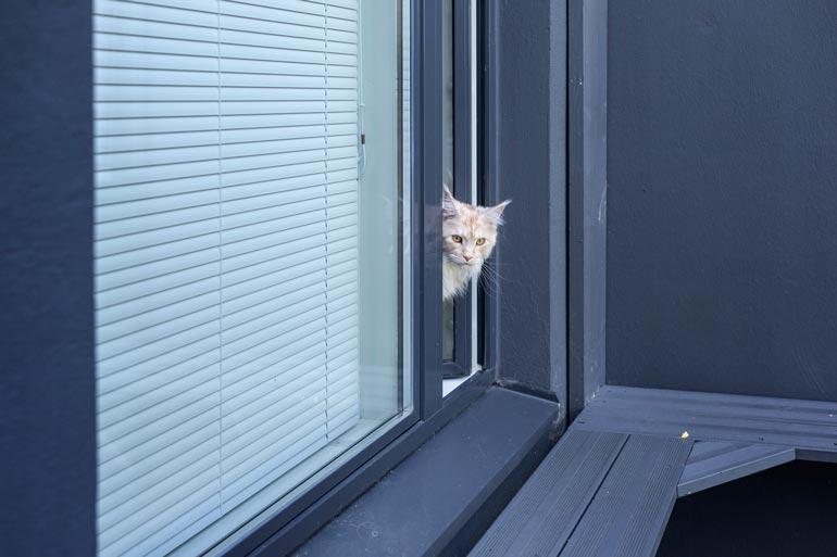 Kissat pääsevät livahtamaan ulkohäkkiin Jutan Max-pojan huoneen ikkunasta.