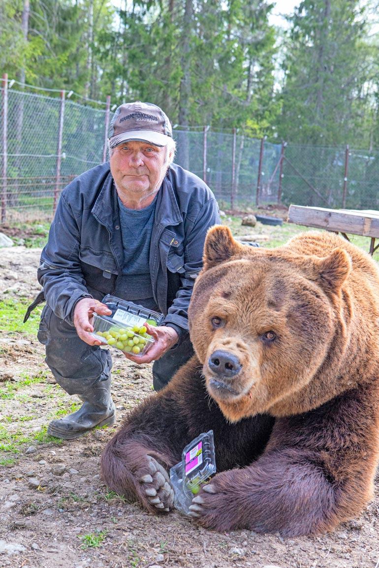 Sulo ja Juuso ovat erottamattomat. – Luonnossa karhut elävät 20 vuotta, ja Juuso täyttää Juuson päivänä pyöreät 20. Tarhattu karhu voi elää jopa 40-vuotiaaksi.