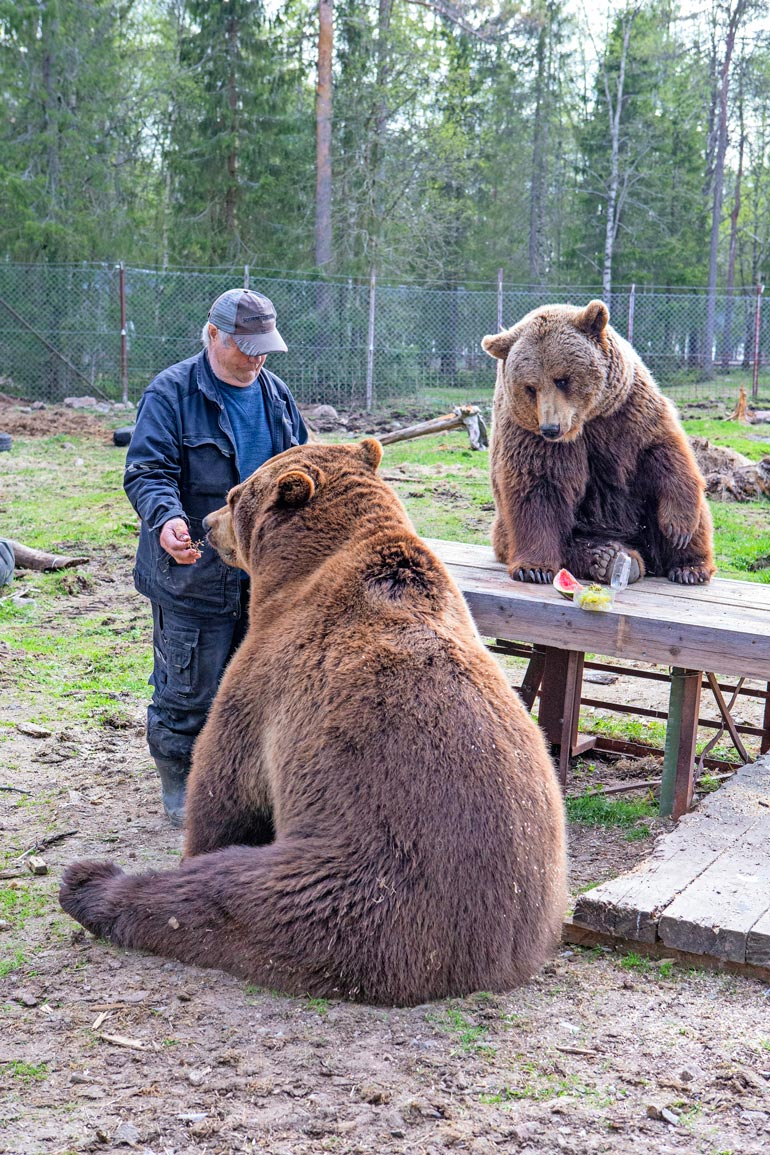 – Juuso on ylivoimaisesti muita karhuja älykkäämpi. Se kaipaa seuraani jatkuvasti. Joskus se on mustasukkainen, kun joku muu saa huomioni.