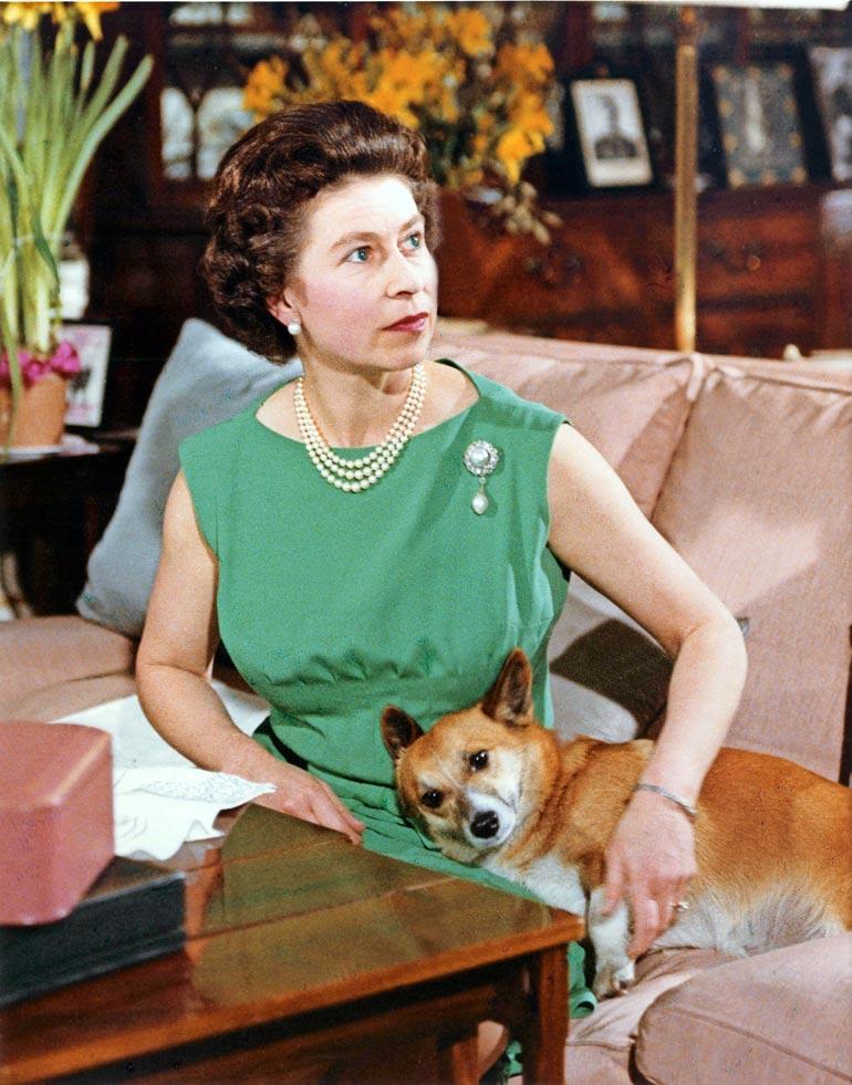"""Brittihallitsijalla, kuningatar Elisabetillä on ollut corgi-koiria """"aina"""". Niitä on vuosien saatossa ollut Ellulla jo 30. Kuva on vuodelta 1969."""