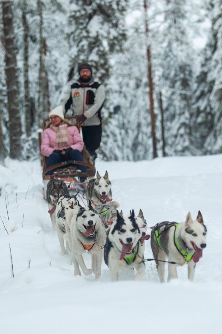 Huskysafarit järjestää Arctic Borealis Huskies. – Lähdemme safareille suoraan eläinpuiston edestä, asiakas saa itse ohjata huskyvaljakkoa, yrittäjä Lionel Clauser kertoo hymyillen.