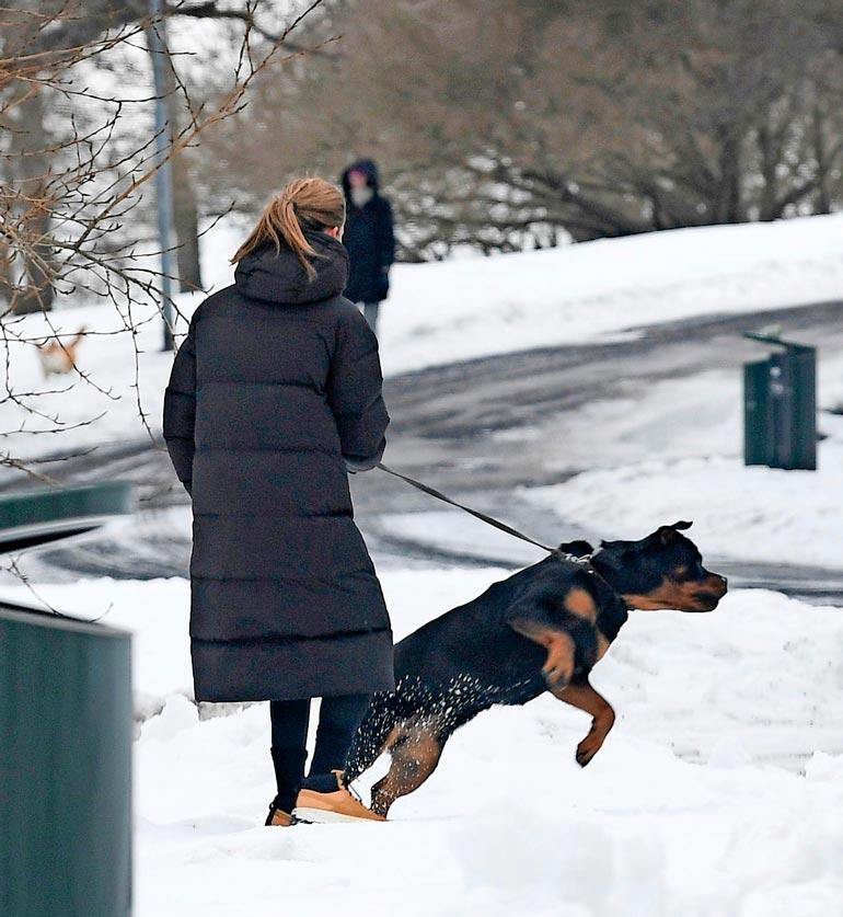 Martina joutui käskyttämään tosissaan koiraansa, joka ärisi toiselle koiralle aamulenkillä. Tilanne näytti välillä todella hurjalta.