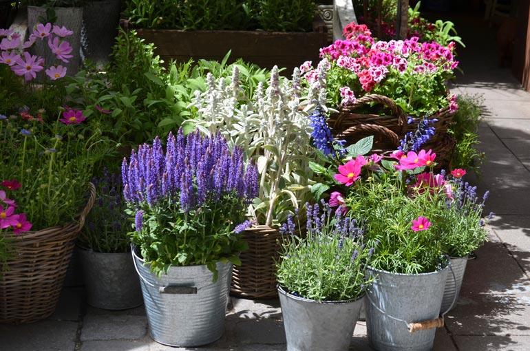 Tarjouskasveihin tarttuminen kannattaa vain, jos tietää niille olevan tarvetta ja oikeat paikat.