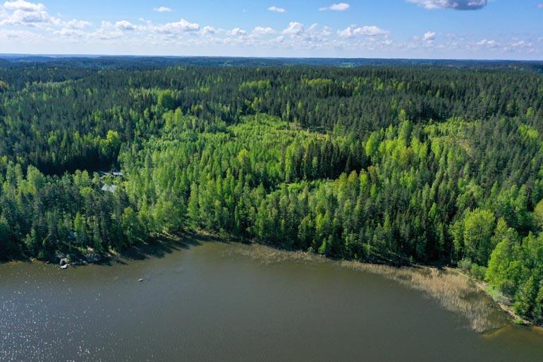Tuija osti yli 14 hehtaarin metsätontin, jolle ei saa rakentaa.Ilmeisesti hän tekikin hankinnan sijoitusmielessä.