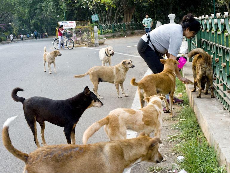 Kulkukoirista tulee vartijoita Thaimaassa.