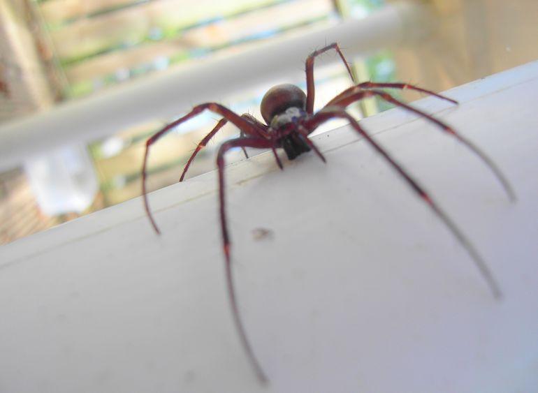 Hämähäkki säikytti nuoren naisen.