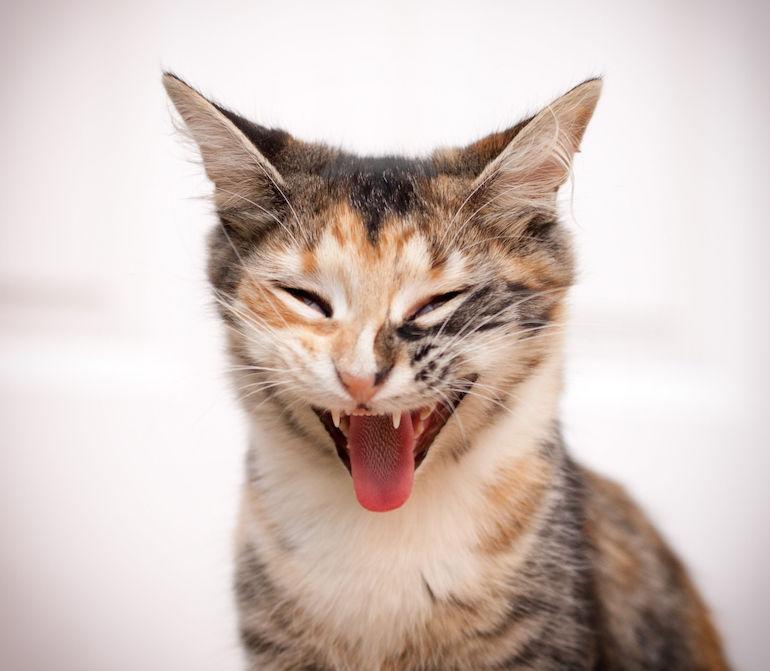 Kissa on pilannut monta seksihetkeä