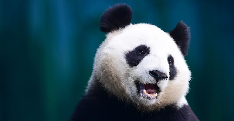 Pandat paljastuivat koiriksi.