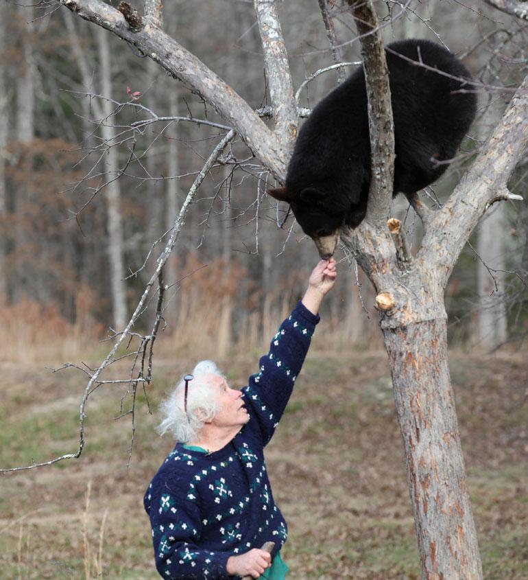 Joel touhuaa puussa olevan karhun kanssa