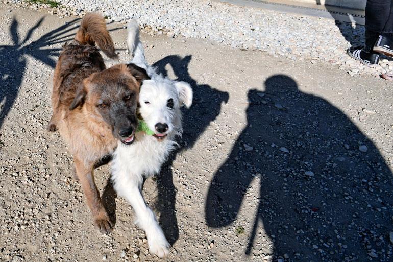 Eva on adoptoinut itselleen useita koiria. – Ottaisin vaikka nämä kaikki, jos minulla olisi siihen mahdollisuus.