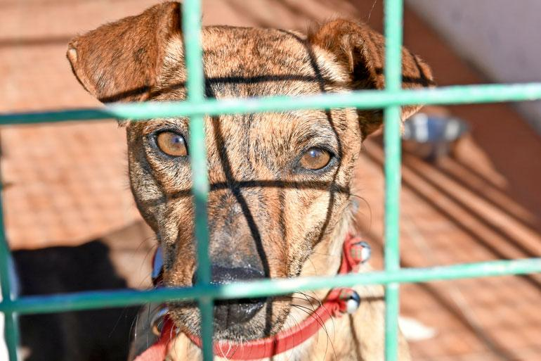 Tarhalla koirat pääsevät eläinlääkärin hoitoon, tehdään loishäätö ja ne sirutetaan. Lisäksi ne opetetaan luottamaan taas ihmisiin ennen luovutusta.