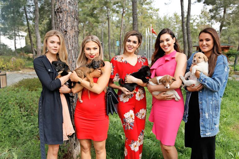 Kaunottaret vierailivat koiratarhalla. – Haluamme ottaa nämä pennut mukaan, missit totesivat yhteen ääneen.
