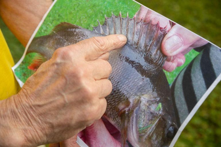 Matti nostaa ahvenen järvestä ja ottaa selkäevästä valokuvan. Kuvasta hän voi rauhassa tulkita sään.
