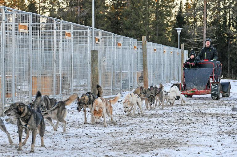 Koiravaljakkoalueilla voi kokea vauhdin hurmaa. Vähälumisten talvien ja kelien varalta löytyy kyytipeliksi myös kärry.
