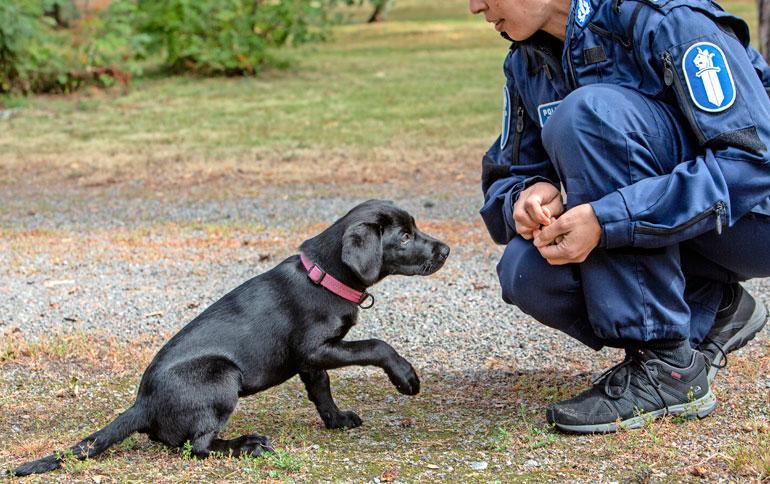 Koiria ja poliiseja on koulutettu Rinkelinmäellä 1920-luvulta saakka.