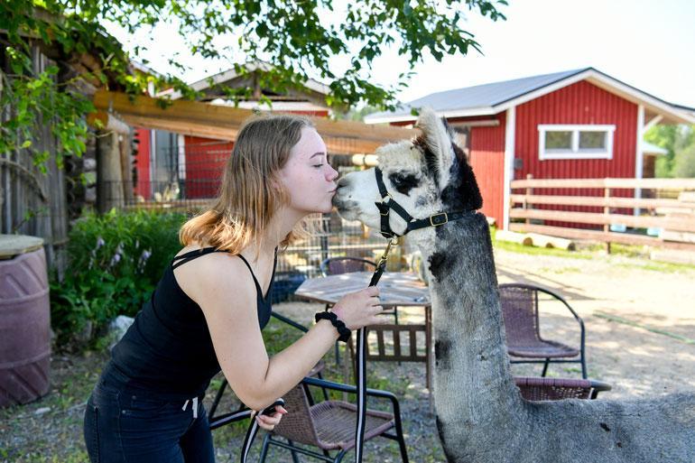 Alpakka agility -kisat on suomalaisten harrastus. – Olen kuullut, että Ruotsissa olisi jotain kisoja, mutta tämä ei ole koko maailman harrastus, tilan tuleva omistaja Jessika kertoo.