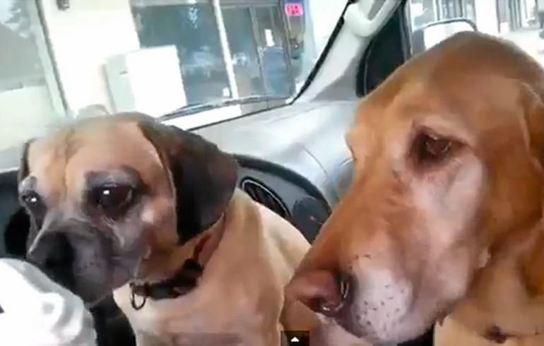 Kaksi koiraa, yksi jäätelötötterö - kuinkas sitten kävikään?