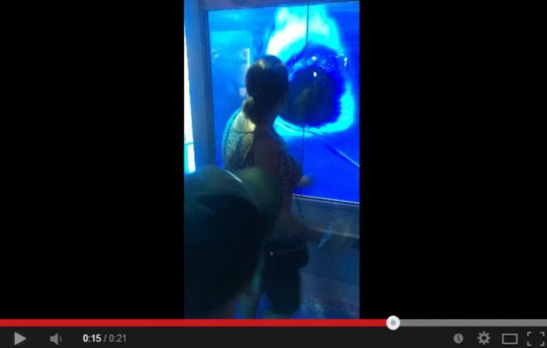 Jättimäisen valkohain hyökkäys akvaariossa: mummeli sai elämänsä slaagin – video!