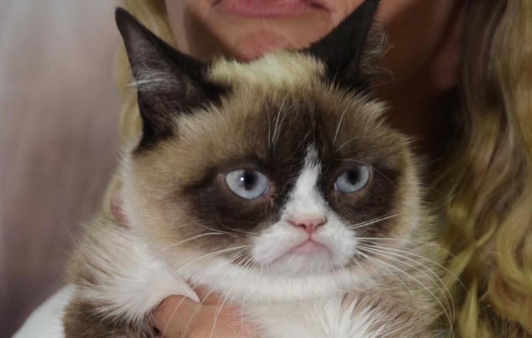 Karvinen ja Grumpy Cat tapasivat - kumpi karvakasa on maireampi mutrunaama?