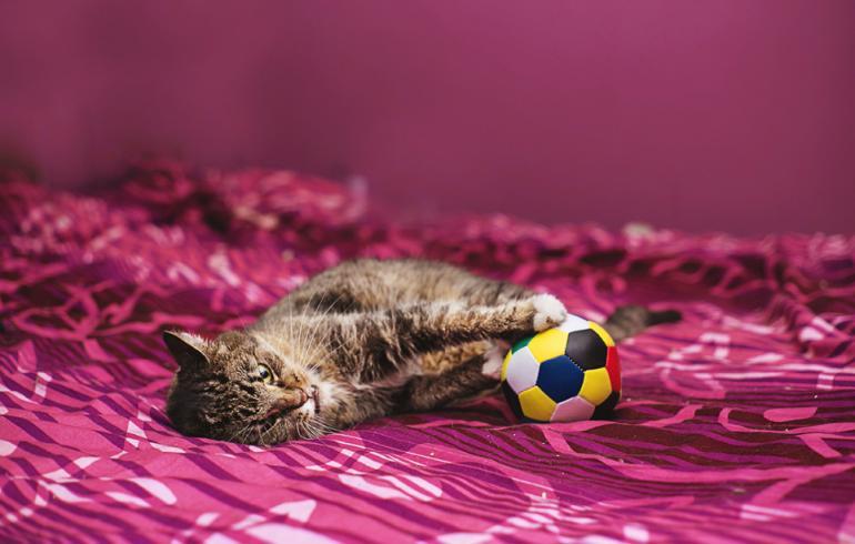 Söpöysvaroitus! Tässä saattaa olla maailman surumielisin kissa - hellyttävät kuvat!