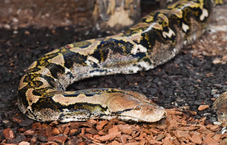 Maailman Suurin Käärme