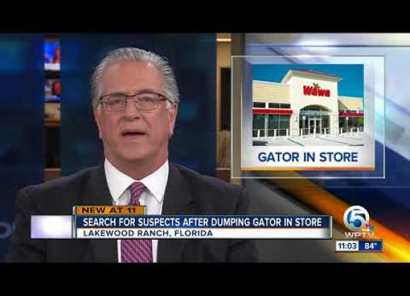 Ruokakaupasta löytyi hylätty alligaattori! Katso video!