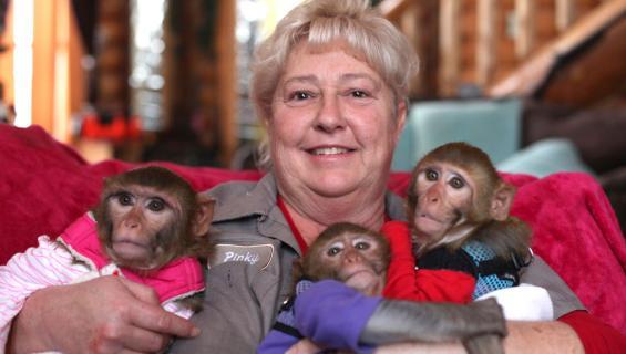 Pinky Janota ja apinat.