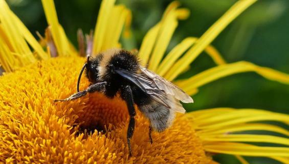 Nainen kuoli mehiläisen pistoon.