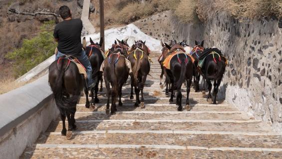 Santorinin aaseja suojellaan turisteilta.