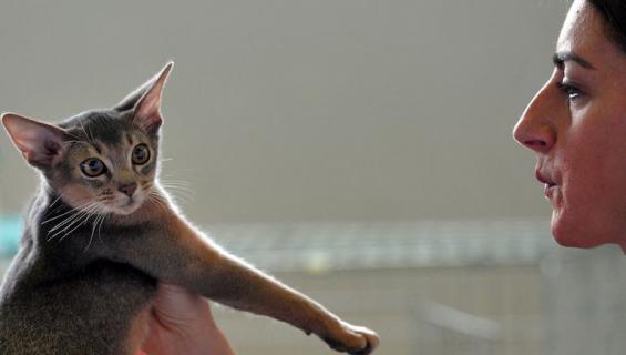 Kissa heijastaa omistajansa tunteita.