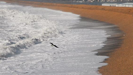 Lokki tapaa pelastajaansa rannalla.