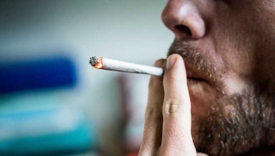 Kannabista tutkittiin jälleen.