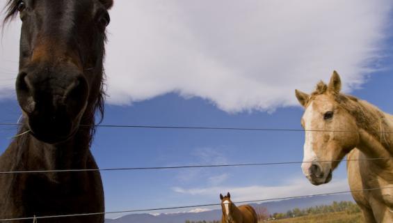 Hevoset olivat esillä korvaushakemuksessa.